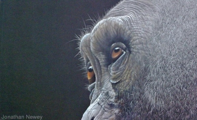 primate-eyes[1]
